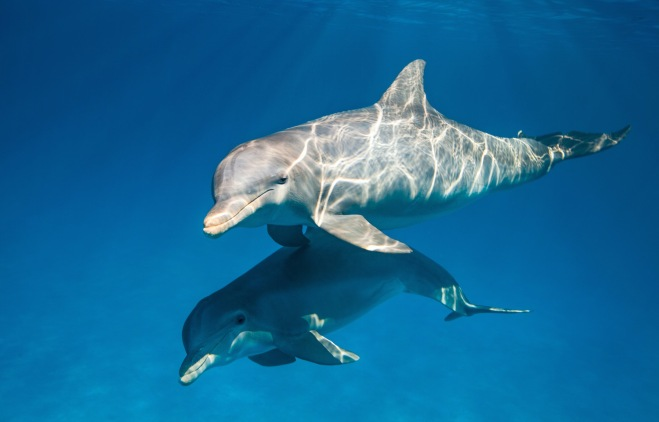 "Disneynature ""Dolphins"""